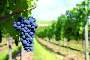 Vinicolas, vinicolas em santiago do chile